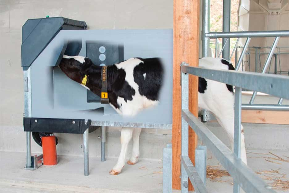 Auto Calf Feeder and Hygiene Station