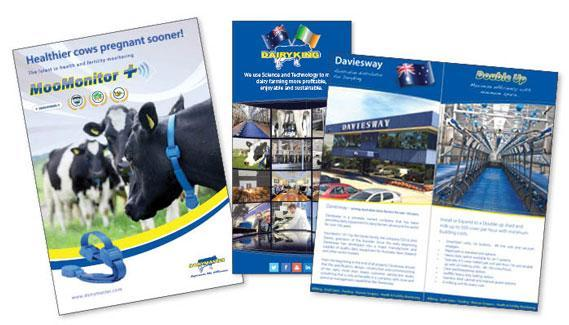 dairyking brochures web